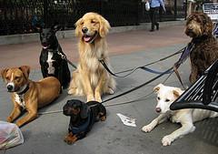 Inzetbaarheid van dieren voor bedrijven